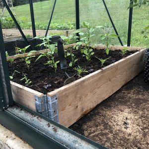 Pallet collar now a raised bed in greenhouse
